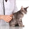 Ветеринарные клиники в Духовщине